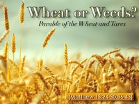 Wheat Or Weeds.001.jpeg